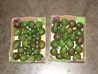 Perishables - Fruit